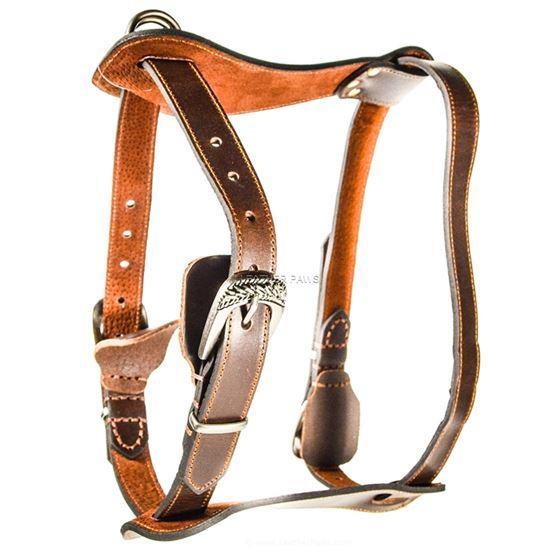 Red Oak Medium Harness