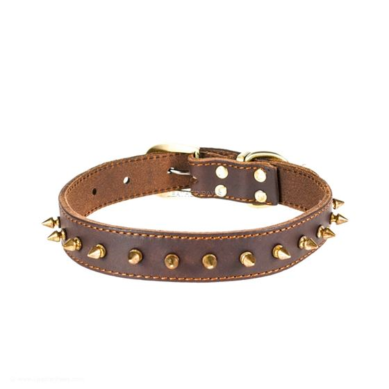 Red Oak Gladiator Leather Collar Closeup
